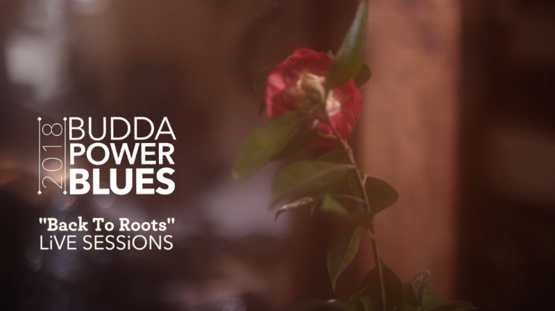 Budda Power Blues Back to Roots